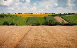 Куда платить за аренду земельного участка